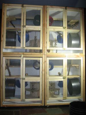 petsmart cage