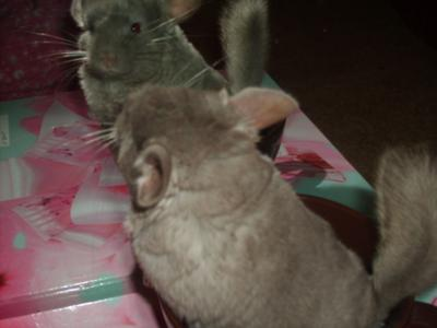 Whos the chilla over there??